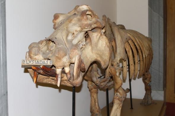 lusiadas_museu_ciencia