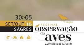 festival_aves