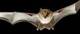 morcegos_serralves