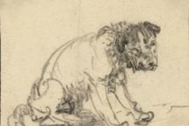 The Braunschweig terrier_rembrandt