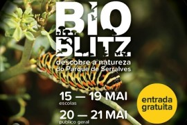 bioblitz_serralves