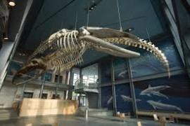 new_bedford_whaling_museum
