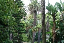 jardim_botanico_lx