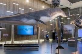 museu_baleia_madeira
