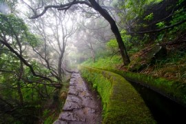 floresta_laurissilva_madeira