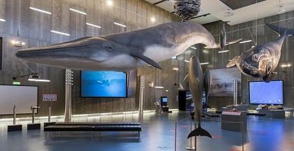Museu da Baleia, Madeira