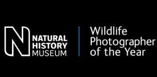 wildlife_photographer_of_the_year